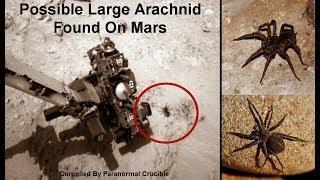 Possible Large Arachnid Found On Mars