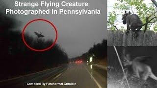 Strange Flying Creature  Photographed In Pennsylvania