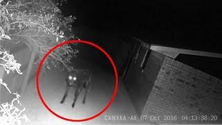 A Strange Creature Appeared In Dark!! Ghost Sightings 2017 !!