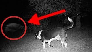 5 Fantasmas Reales Vistos por Perros | Top Paranormal HD