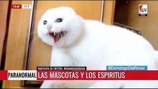 #TodoEnUno #DomingoDeRossi Bloque Paranormal | LAS MASCOTAS Y LOS ESPIRITUS