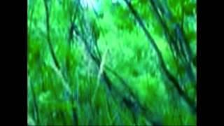Sasquatch sighting Mt Rainier National Park Breakdown