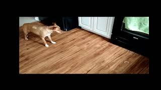 Dog scared to get her treats - ghost? #2 - Chuck's Paranormal Adventures