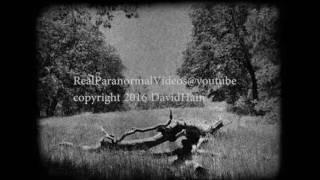 ALIVE DINOSAUR FILMED IN RUSSIA 러시아에서 촬영 ALIVE 공룡 ロシアで撮影ALIVE DINOSAUR ALIVE恐龙摄制俄罗斯