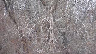 Trees Where I Am Spotting Some Spirits