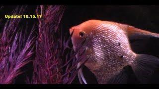 10/15/17 Quick little update. Fish with a message!