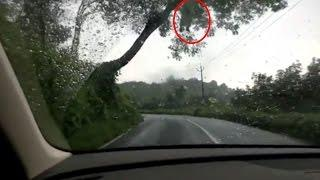 Ghost Near Tree | Real Ghost Caught On Camera | Best Scary Sightings