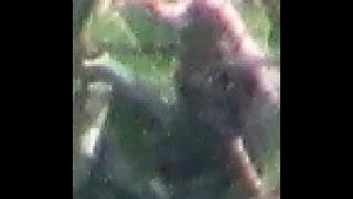Big Eyed Sasquatches in the Sasquatch Trees - Like Always