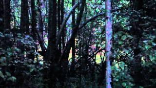 Truckee California Bigfoot Sighting Send In