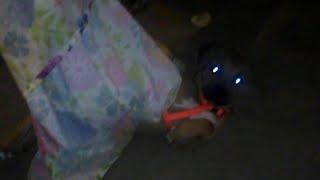 Dog Vs Blanket