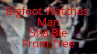 Bigfoot Watches Man Sha Ble From Tree MUST SEE!!!