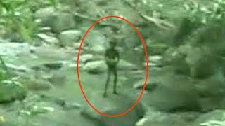 Terrific Ghost Sighting From Amazon Forest | Ghost OR Alien ? Real Ghost Videos | Scary Videos