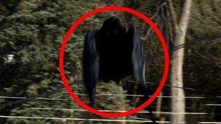 5 Criaturas Extrañas Captadas en Bosques