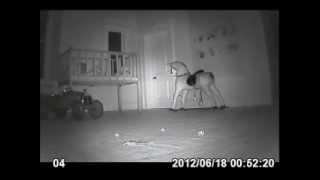 cctv footage of paranormal activity enniscorthy castle