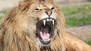 The Man Eating Lions Of Tsavo Kenya