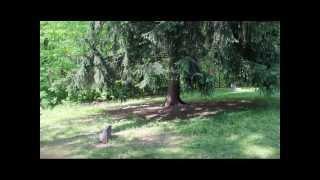 Stepp Cemetery Investigation Pt 2
