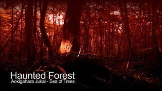 Haunted Forest - Aokigahara Jukai Suicide Forest (The Paranormal Guide)