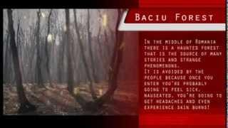 The haunted forest - Baciu - UFO and paranormal activity