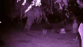 Ghost Hunters Of South Texas Society Investigate The Rio Hondo Community Cemetery (PartI)