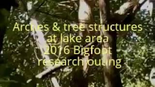 Arches & tree structures at lake area 2016 Bigfoot research outing