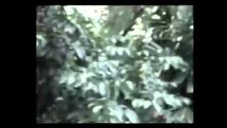 Malaysia Yeti Breakdown