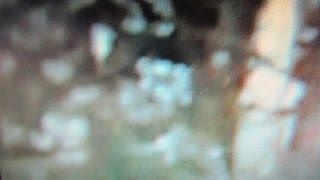 Cloaked Bigfoot /Entities ~ The Perplexity Of Time & Bonus X-Mas Special