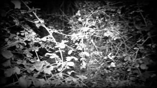 Vérité Paranormal - Enquête n°2 La maison des ronces [EXTRAIT]