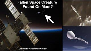 Fallen Space Creature  Found On Mars?