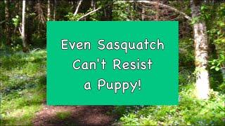 Even Sasquatch Can't Resist a Puppy!  Featuring Jack with Barb & Gabby