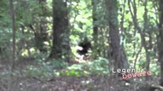 Bigfoot Stealing Livestock?