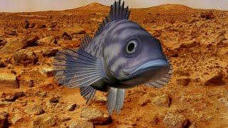 Fossilized Fish Found On Mars?