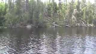 Bigfoot Hunt Northern Minnesota