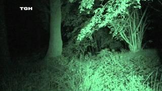 Excorcistonline, horses on the loose, The horse riding school is haunted!