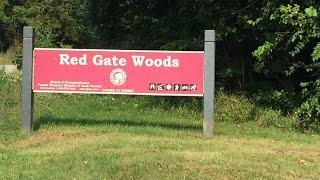 The Legend of Red Gate Woods