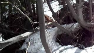 Emerald Bay Part 7 Snowballs and Bigfoot