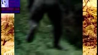 Back of Bigfoot Photographed in Georgia? (2013)