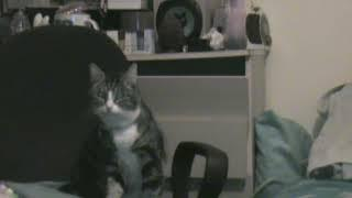 Steves-Haunted-Home: Tammy The Paranormal Cat: Mini Episode 3 Whats she looking at.?