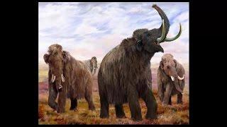 Larry The Mammoths Skull Is Confusing Paleontologists