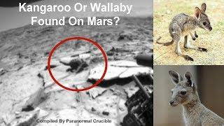 Possible Kangaroo Or Wallaby Found On Mars?