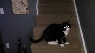 My pets in my haunted bedroom