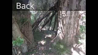 Possible Juvenile Bigfoot Shelter!