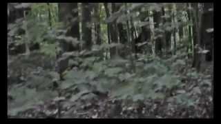 Incredible Bigfoot Footage 2013 Breakdown