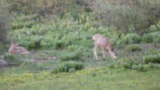 """Noble & Bull Lake - Part 24 """"Oh Deer"""""""
