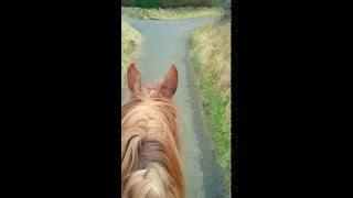 go pro  riding big mac my 18.2 irish draft part 5