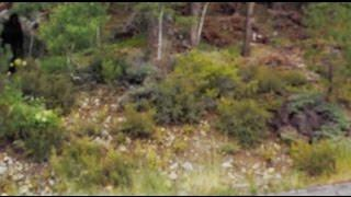 Lake Tahoe Bigfoot Sighting Zoomed in and slowed down