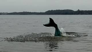 Freshwater Mermaid Caught on Tape