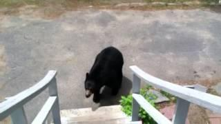 Mama Blackie the Bear