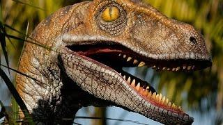 Alive Raptor Film By Women   Real Dinosaur Sighting REAL or FAKE?