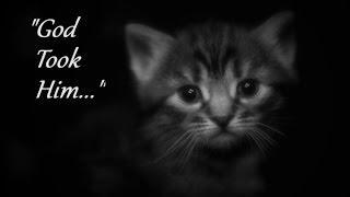 Little Girl Gets Dark Revenge On Evil Parents Who Killed Her Kittens! | THE KITTENS! | Creepy Story!