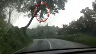 Ghost Caught On Camera Over A Tree | Ghost Scary Videos | Real Ghost Sighting